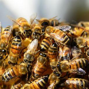 Bienen auf Wabe - BUND KV Stuttgart
